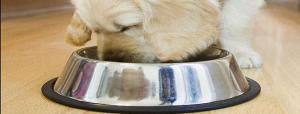 l'obésité du chien ,races de chiens ,développement de l'obésité chez un chien,soigner l'alimentation du chien, faire garder le chien,