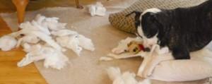 causes du comportement destructeur ,chien en manque de stimulation ,trouble du comportement ,jouets pour chien