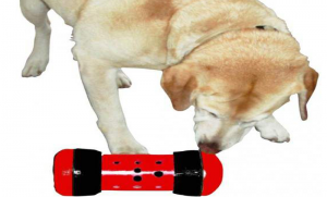 distributeur de croquette pour chien ,problèmes de destruction ,surcharge pondérale ,l'obésité canine,mode de garde