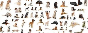 adopter un chien,un chien,choisir une race de chien ,race de chien ,chien avec de longs poils