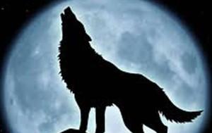 petit chien ,pleurer la nuit,chien qui pleure la nuit ,peur la solitude , Que faire quand un chien pleure toute la nuit