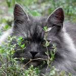 dangers pour les chats ,causer la mort de l'animal,protéger les animaux ,dangereuses pour les animaux de compagnie,la famille des liliacées ,les dragonniers ,causer des irritations buccales ,la liane du diable,conséquences très graves pour les chats et les chiens